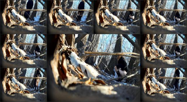 Pisshunter-2 20140301Sb165111molodkavdlinnomplatemulejnrush